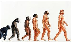 evolution3 El incomprendido Darwin